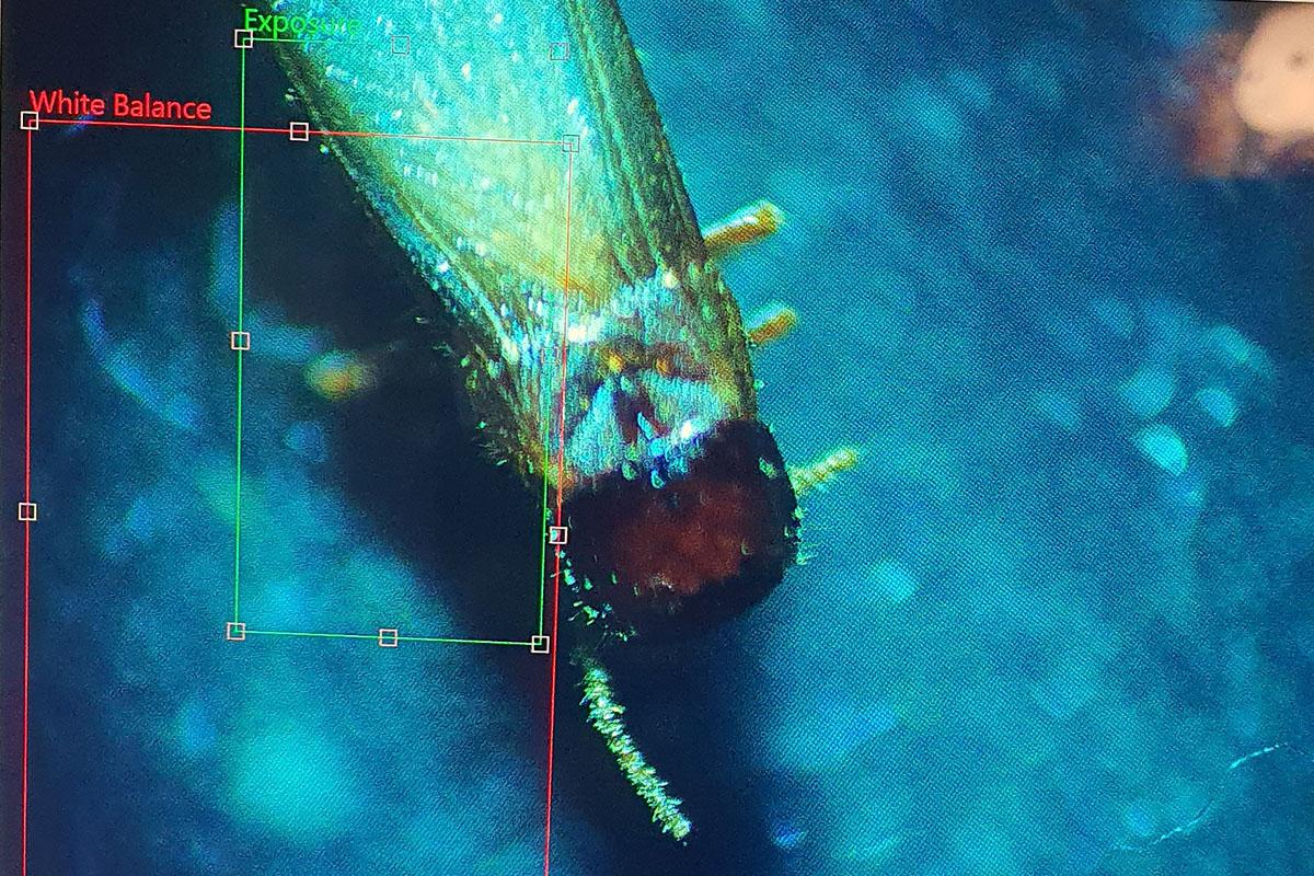 Untitled-1_0002_מתחת לעדשת המיקרוסקופ שלנו