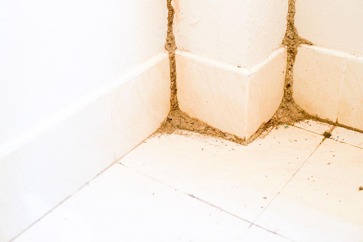 טוטאל הדברה- תעלות בוץ שנוצרו בעקבות טרמיטים בקיר