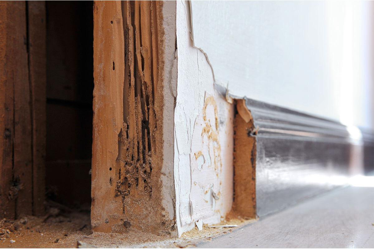 טוטאל הדברה | נזק של טרמיטים במשקוף דלת